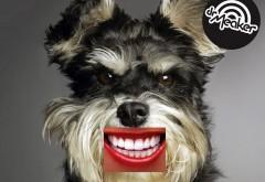DR Dog2